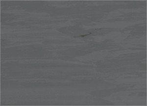 Specjal 43 S Vinyl Flooring 1145 0016 0